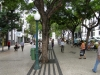 Madeira2012-039