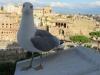 Rome-283