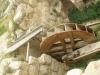 Jerash2014-043