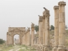 Jerash2014-065