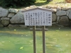 Miyajima-Hiroshima-037