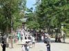 Nara-045